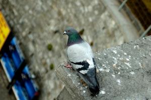 Taubenspikes-halten-Tauben-ab